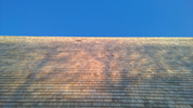 Untreated Blue Label Shingles installed on vertical wall